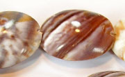 Oval, 24x30mm, Land Snail beads, TROPICAL SHELL BEADS